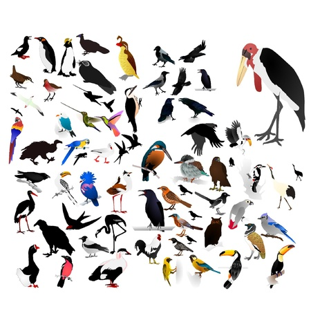 woodpecker: collection of vector images of birds