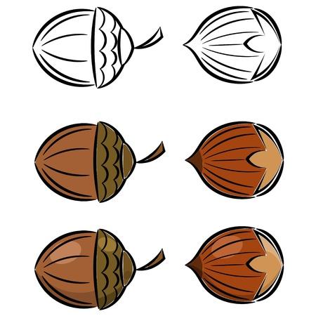avellanas: Cartoon conjunto de avellana y bellota Vectores