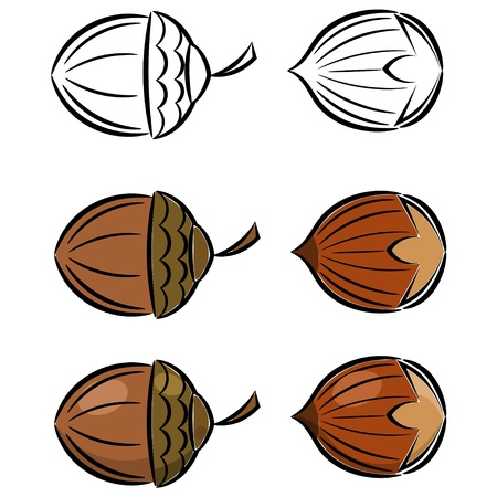 Cartoon set of hazelnut and acorn