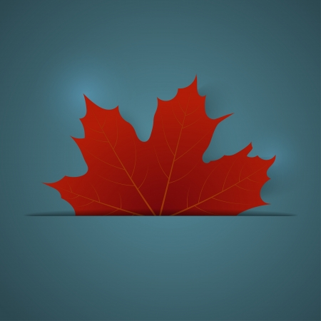 maple leaf: Red maple leaf on a blue background