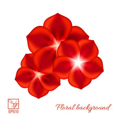 Reeks rode die bloemen op witte illustratie wordt geïsoleerd als achtergrond.