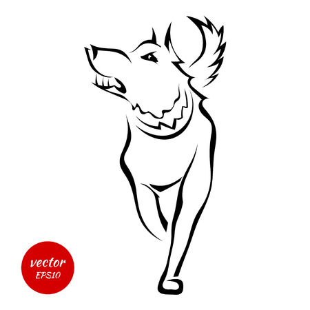 canine: Silhouette of the bad wolf isolated on white background. Vector illustration.