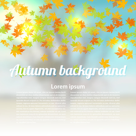 changing seasons: Autumn background with colored maple leaves. Changing seasons illustration.  Banner, card, poster.