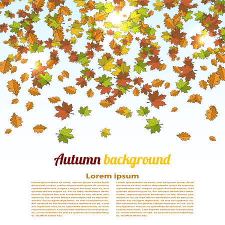 changing seasons: Autumn background with colored maple leaves. changing seasons illustration. Banner, card,  poster. Cartoon style. Illustration