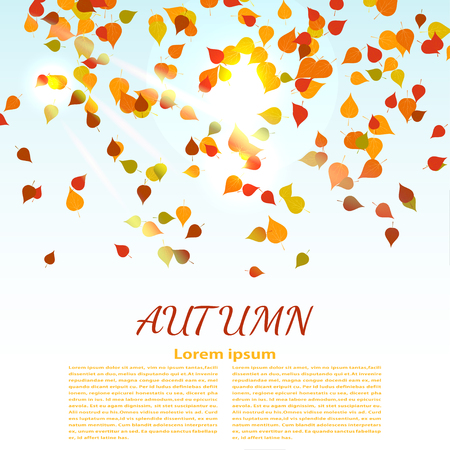 natural phenomenon: Autumn background with colored maple leaves. changing seasons illustration. Banner, card,  poster advertising. A natural phenomenon. Illustration