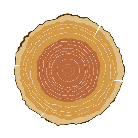 rings on a tree cut: Vector illustration of round cut wood with growth rings. The cut logs on a white background. Isolated object. Tree rings, nature.