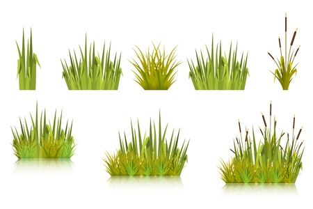 Color vector image of a green reeds grass and a number of coast plants on a white background.