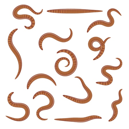 Set of earthworms in different positions on a white background. Isolated insects. Collection of dung worms. Vector illustration
