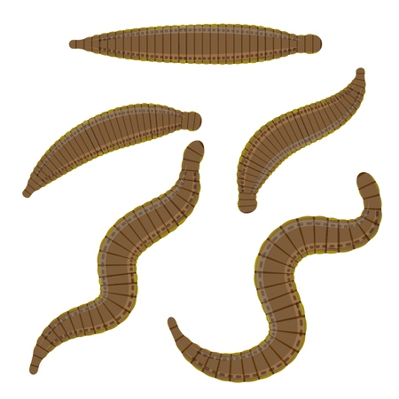 Set  leeches on a white background.  medical leeches. Vector illustration of bloodsucking worms