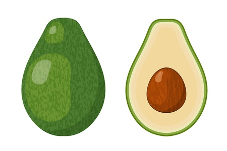 Two halves of ripe juicy avocado with a bone on a white background. Vector illustration of a tropical fruit. Vegetarians food Фото со стока - 127075531