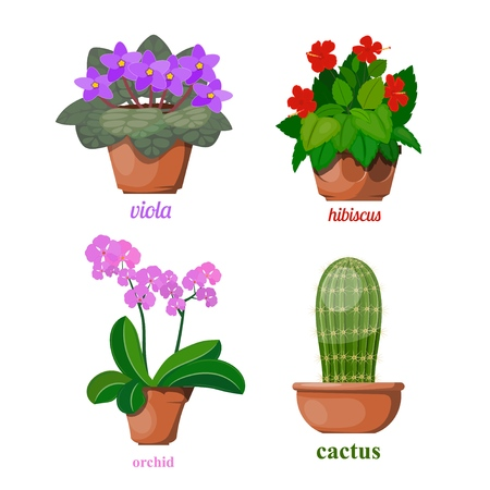 Set of flowers in clay pots on a white background. Blooming home flowers. vector illustration of an orchid, cactus, hibiscus, violets Фото со стока - 127075536
