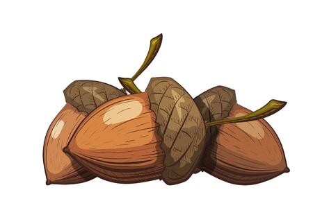 Grupo de bellotas con cáscara sobre un fondo blanco. Dibujo en estilo de dibujos animados del color. Ilustración de vector de semillas de roble.