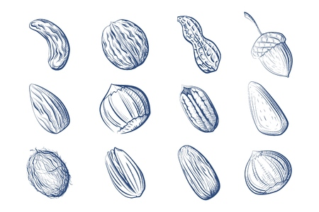 Large set of graphic images of nuts on a white background Vector illustration of hand drawing of fruits of peanut, chestnut, cashew, pecan, walnut, brazil nut, coconut, acorn, pistachio, almond Иллюстрация