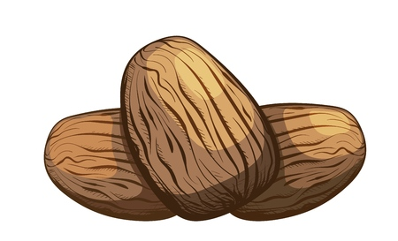 Color image of a group of nutmeg nuts on a white background. Healthy and dietary food. The element of proper nutrition. Vector illustration of a nut fruit