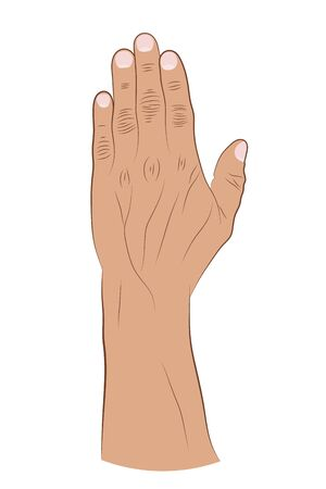 Human hand raised up on a white background. Vector illustration of a brush with fingers. Hand drawing Фото со стока - 129687755