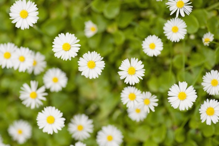 Top View of white flowers Stock Photo