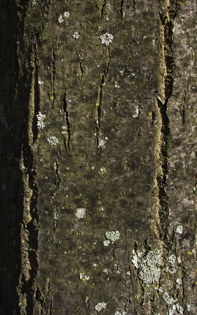 treetrunk: Front view and close up of tree trunk Stock Photo
