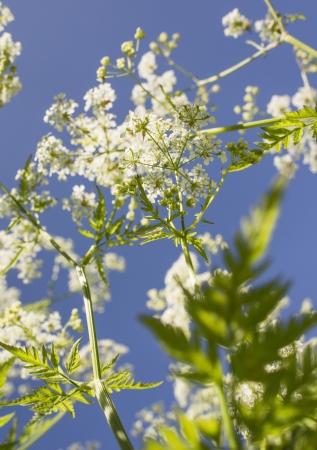 Las flores frescas que crecen en un ambiente de verano con el cielo azul arriba Foto de archivo - 15193727