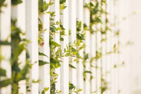 Closeup of white wooden fence in garden at summer Stock Photo - 16935359