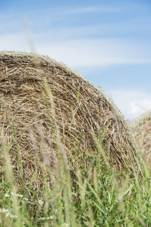 hayroll: Summer scene with hay bales used for animal fodder Stock Photo