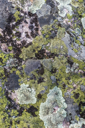 Closeup of stone with natural colored pattern Stock Photo
