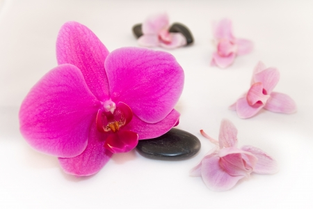 orchids with black stones