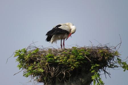 hauteur: Cigogne sur son nid en Alsace Stock Photo