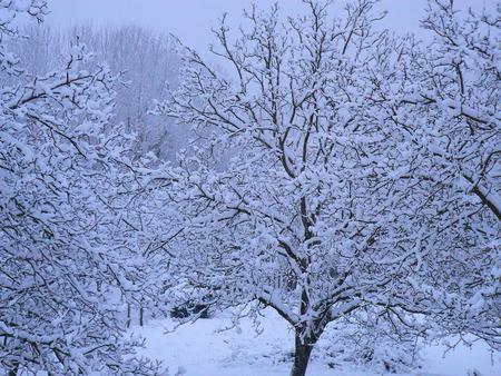 Scènes d'hiver dans les Alpes - scènes d'hiver dans les Alpes, France Banque d'images - 49265560