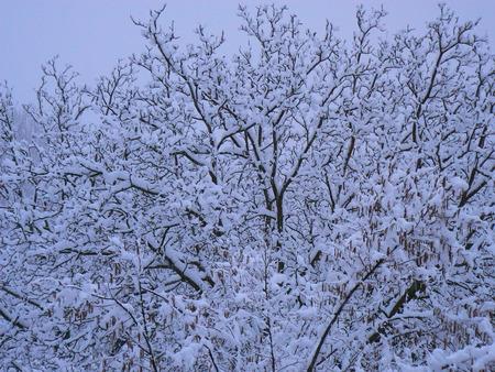 Scènes d'hiver dans les Alpes - scènes d'hiver dans les Alpes, France Banque d'images - 49265881