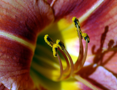tiger lily: Tiger Lily