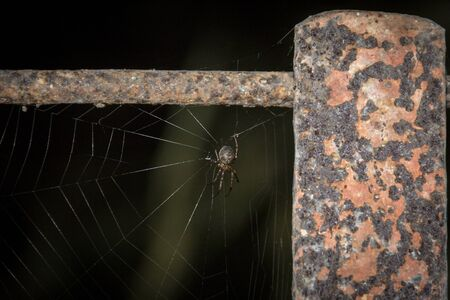 the spider on its web Stock fotó