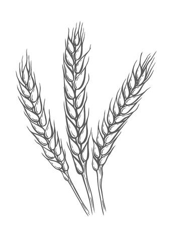 Tarwe brood oren granen gewas schets.