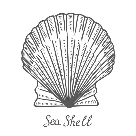 Hand drawn Seashell, sea shell, nature ocean aquatic underwater vector. Seashell marine engraving illustration on white background