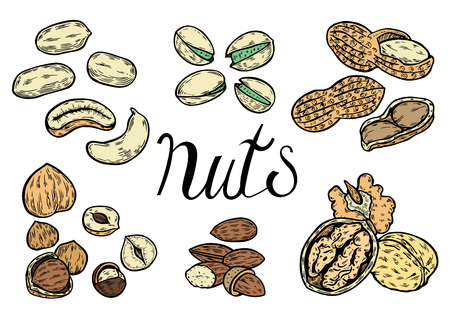 Hand drawn Nuts set, almond, walnut, peanut, pecan, pistachio, cashew, nutmeg seed vector. Isolated on white background. Engraved illustration.