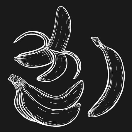 Hand drawn Banana fruit
