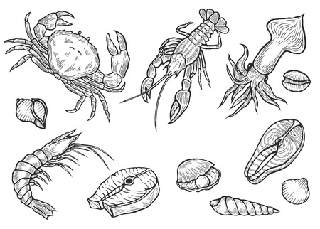 Hand drawn engraved marine healthy seafood salmon, tuna fish steak, crab, mussels, oysters, prawn, shrimp, squid, lobster, omar, octopus, clam sketch organic product