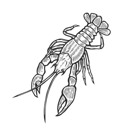 Hand drawn marine lobster omar cancer seafood nature ocean aquatic underwater engraving illustration Illustration
