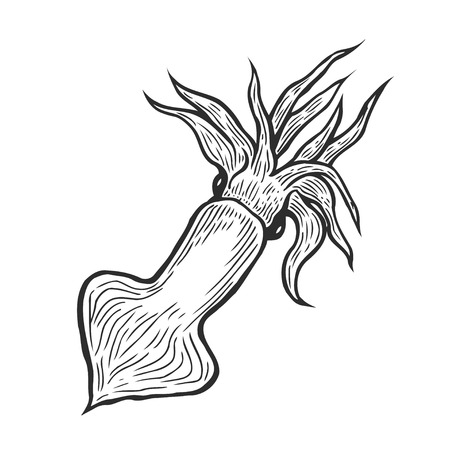 Hand drawn marine squid seafood nature ocean aquatic underwater engraving illustration Illustration