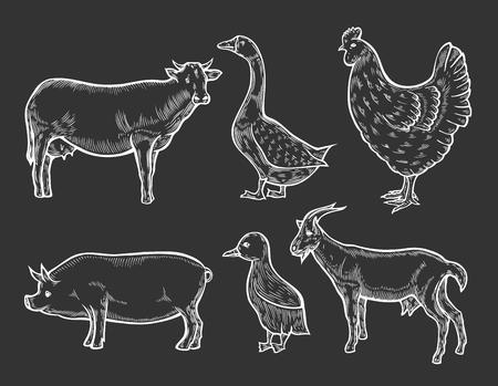 Farm animal set. Hand drawn sketch. Vintage vector engraving illustration for poster, web. Isolated on black background.