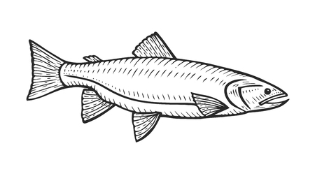 Hand drawn Roach fish cartoon animal sketch illustration. Roach in motion. Hand drawn engraved etch ink illustration. Marine food. Healthy seafood. Organic product. Black on white background Illustration