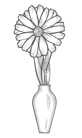 Vase with chamomile flowers. Linear hand drawn vector sketch engraved illustration. Isolated on white background Illustration