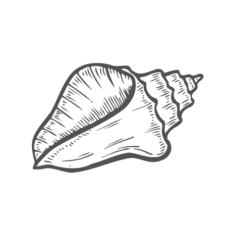 Vector engraving shell isolated on white background Ilustracja