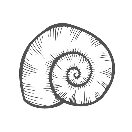 Vector engraving shell isolated on white background Banque d'images - 105750383