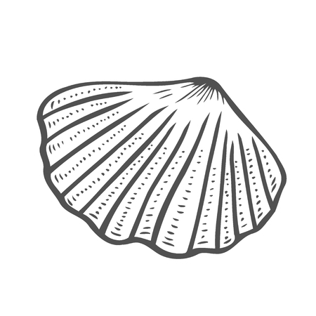 Vector engraving shell isolated on white background Illustration