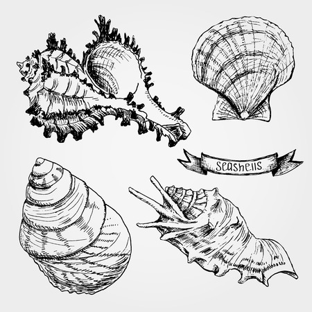 Set of Seashells. Hand drawing sketch vector illustration