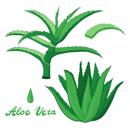 Aloe vera herbal set