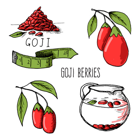 Vector illustration of fresh Goji Berries (Wolfberries) with leaves on white background. Hand drawn sketch of goji berries