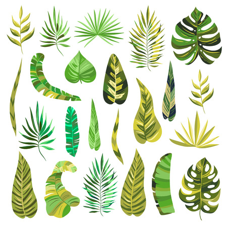 Tropical summer monstera, palm and other plant branches and leaves. Vector decorative paradise garden plants and objects in green colors. Isolated vector greenery elements