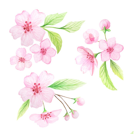 card making: Set of hand painted watercolor cherry flowers and leaves. Spring cherry blossoms theme in delicate pink and green colors. Clip art elements perfect for wedding invitations and card making