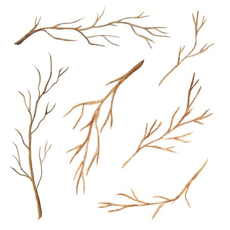 葉のない枝水彩画のセットです。手には、白い背景に分離された裸の思わぬ障害が描画されます。細い繊細な葉のない棒